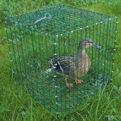 Cage pour chanteuse